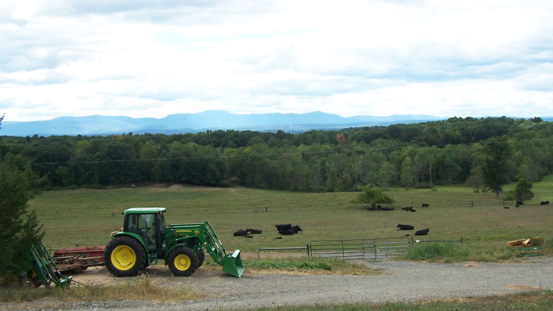 Tractor, field and cows with mountains in the background.